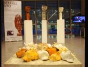 Exposición al CRAI de la URV Tarragona